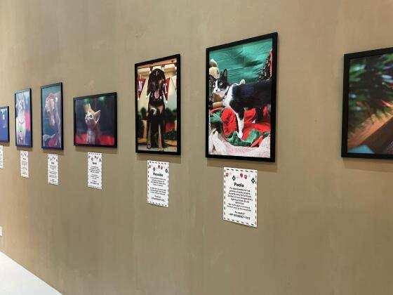 Exposição Projeto Lunaar